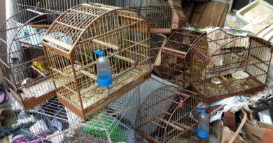 Animais são encontrados em situação de maus tratos no bairro Padre Bento